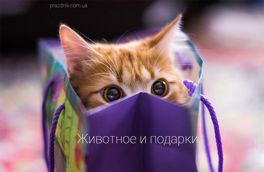Кот как подарок